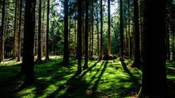 Kuna lesní a její výskyt